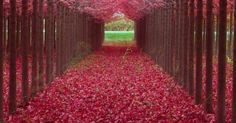 Just Pinned to Forests: Beautiful Autumn Path http://ift.tt/2pxWfTj