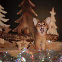 Fox, Christmas, Animals, Instagram, Cats, Animais, Navidad, Animales, Animaux