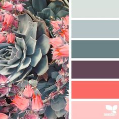 today's inspiration image for { succulent hues } is by @sarahrubydesign ... thank you, Ruby, for another incredible #SeedsColor image share!
