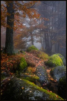 Nature photography by Svetoslav Georgiev