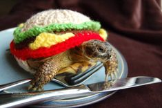 Cute Alert: Tortoise Dressed in a Burger-Shaped Cozy