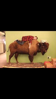 Alex Hirsch....on....a buffalo