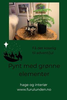 Advent med grønne elementer, hvorfor akkurat det? Jeg tenker at det er enkelt å gjøre det koselig til advent med naturens egen fargepalett. Blomster, planter, mose, ispedd brune kongler i forskjellige størrelser og utseende. #advent #jul #christmasinspiration #hageinspirasjon #julepynt #julekrans #dekor #skandinaviskehjem #mitthjem Christmas Decorations, Plants, Christmas Decor, Ornaments, Planters, Christmas Baubles, Plant, Planting, Christmas Tables