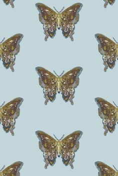Timorous Beasties Wallcoverings - Butterfly