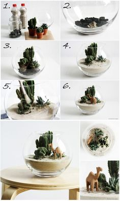 DIY Kleine Wüste Biotop // DIY desert biotope The Effective Pictures We Offer You About DIY Cat post A quality picture can tell you many things. Succulent Gardening, Cacti And Succulents, Repotting Succulents, Mini Cactus Garden, Gardening Zones, Garden Compost, Terrarium Cactus, Mason Jar Terrarium, Air Plant Terrarium