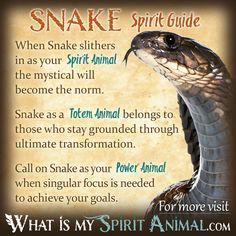 Snake Spirit Totem Power Animal Symbolism Meaning 1200x1200