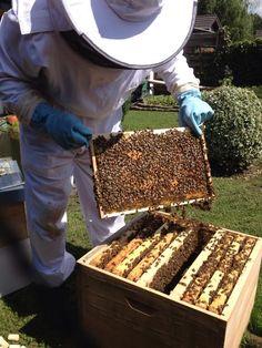 #Bienen #Dandant #Beute #Imker #Waben #Hobby  Bestandsaufnahme 9. August 2014, anschließend Fütterung der Bienen  Bei Twitter: https://twitter.com/AC_Bienenfreund