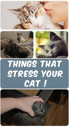 There are many things in life's kitty that can serve to stress her out, including her humans. According to some veterinary, cat are easily stressed. Here is some things you should know that can stress your cat and may surprise you.