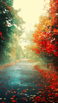 autumn leaves road & trees desktop pc and mac wallpaper. I Phone 7 Wallpaper, Fall Wallpaper, Nature Wallpaper, Pumpkin Wallpaper, Latest Wallpaper, Retina Wallpaper, Artistic Wallpaper, Landscape Wallpaper, Mobile Wallpaper