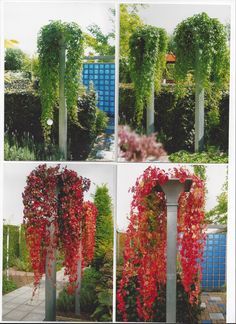 A completely new system for climbing plants. maintenance friendly. The planting (HEDERA) stands with its roots in the solid ground. there is no earth in the column itself. The pillar can be finished with a zinc cap or a square or pyramid wire grid. Made by Hivy Pillar Greenfashion (HPG) www.hivypillar.nl Made in Holland. Backyard Projects, Outdoor Projects, Backyard Ideas, Garden Ideas, Climing Plants, Garden Arch Trellis, Outdoor Gardens, Roots, Daisies