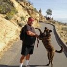 Dog who saved hiker's life given PETA's heroic mutt award #dogs #news #animals #PETA