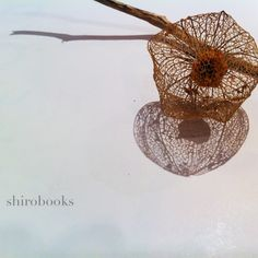 shirobooks photo by TsutomuKomine