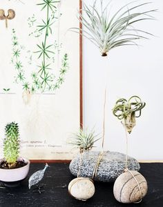 Planteinspiration