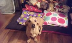 View from the Birdhouse: Dear Abby - How to Help a Choking Dog