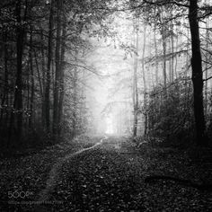 path by AndreaSchuh