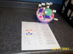 SpotlightThe 7th Grade Science Project On Plant And Animal Cells