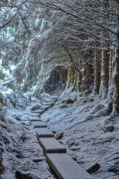 winter landscape photography - nature