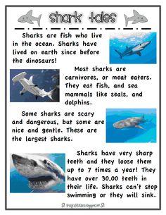 shark report.pdf