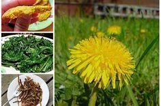 10 Yummy Dandelion Recipes