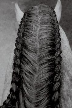 French braided Horse Mane.
