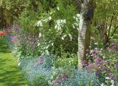 seringat arbres arbustes bakker francele seringat est beau dans le jardin en solitaire. Black Bedroom Furniture Sets. Home Design Ideas