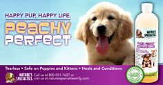 Have a little puppy or kitten getting dirty? Try our gentle Peachy Perfect tearless shampoo!