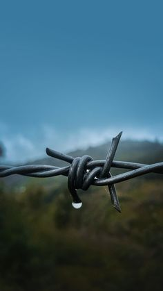 Close up, barbed wire wallpaper 2160x3840 Wallpaper, Flower Phone Wallpaper, Locked Wallpaper, Very Nice Images, Farm Lifestyle, Western Photography, Vintage Gothic, Barbed Wire, Ear Jewelry