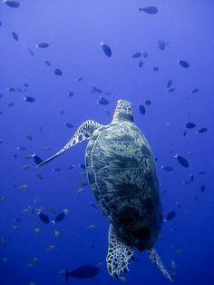 SEA TURTLES!!!!!!!!!!!!!!