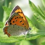 Colorful Butterfly Pictures and Caterpillar pictures. Beautiful pictures of butterflies! Butterflies are excellent subjects for photog. Good Morning Quotes For Him, Good Day Quotes, Good Morning Good Night, Good Morning Wishes, Day For Night, Night Quotes, Beautiful Butterfly Pictures, Beautiful Butterflies, Poems Beautiful