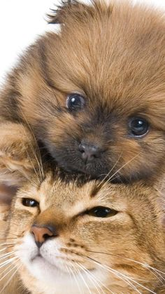 puppy, kitten, face, friendship