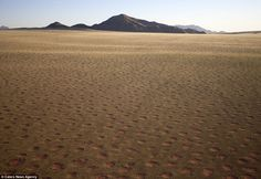 The mysterious fairy rings that stretch across the grassy plains of the Namib desert in Na...