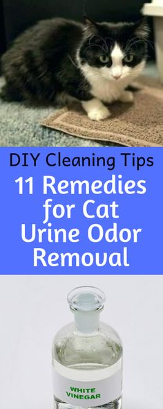 Effective Home Remedies for Cat Urine Odor Removal How to Get Rid of Sour Cat Urine Odor for Good. Removal Of Cat Urine Odors Is Easier Than You Think with Home RemediesSour Grapes Sour Grapes may refer to: Deep Cleaning Tips, House Cleaning Tips, Diy Cleaning Products, Cleaning Solutions, Cleaning Hacks, Cat Pee Smell, Cat Urine Smells, Remove Cat Urine Smell, Urine Odor