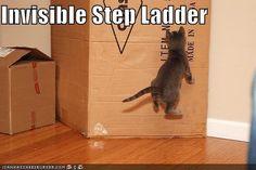 Gatos usando cosas invisibles