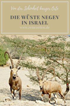 Es war eher eine überraschende Liebe: die Wüste Negev (Israel) und ich. Ganz unerwartet hat mich gerade die Kargheit der Wüste, das Unwirtliche, Ausgeblichene besonders gefesselt.