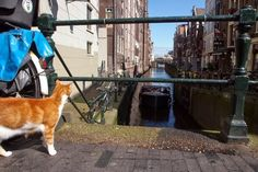 Cat from Amsterdam, Netherlands