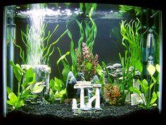 50 gallon aquarium setup