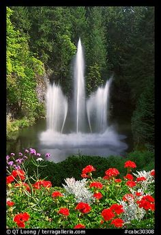 Ross Fountain and flowers. Butchart Gardens, Victoria, British Columbia, Canada (color)