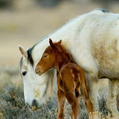 theperfectworldwelcome:  redwingjohnny:  First Wild Foal of the Season by Kent Keller #happymother'sday :)  Beautiful !!! \O/