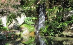 Waterfall, Plants, Outdoor, Outdoors, Waterfalls, Plant, Outdoor Games, The Great Outdoors, Planets