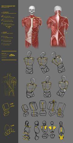 Simplify human body study 43CW by JustIRaziel.deviantart.com on @deviantART