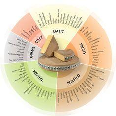Aroma Wheel