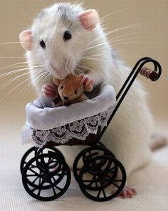 Mama Mouse and baby carriage