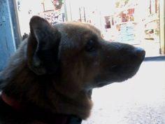 20140105 每天我都期待回家,看到他 九歲的money已是老狗,家附近寵物美容店店狗 個性沉穩的他從來沒有對我用力要尾巴過 每次經過店門口看到他,我會蹲下引他過來 有時候他會慢條斯理的走過來 有時候不甩我 就算到現在認識他三個多月,他還是有戒備心 所以我總不敢太大動作,怕嚇到他 但有時候他會在摸摸時,越靠越近  他總是在我有苦無路訴的時候 讓我可以笑