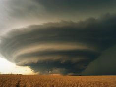Supercell and Wheat Field - Kansas - allposters.com