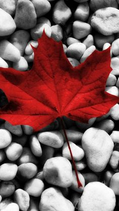 Proud to be Canadian Grey Wallpaper Phone, Wallpaper Canada, Leaves Wallpaper Iphone, Wallpaper Nature Flowers, Beautiful Nature Wallpaper, Fall Wallpaper, Wallpaper Backgrounds, Canada Day Images, Canada Tattoo