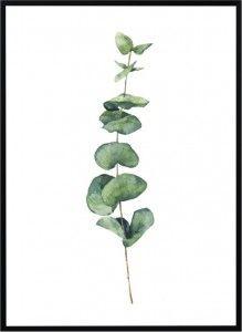 Plakat  Watercolor eucalyptus  - różne rozmiary