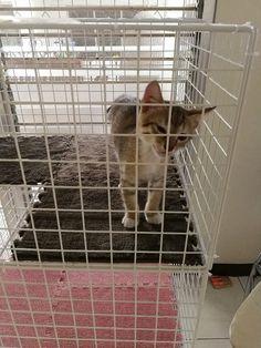 f:id:madokachandayo:20180315182110j:plain Cat Enclosure, Home Appliances, Cats, House Appliances, Gatos, Kitty Cats, Kitchen Appliances, Cat, Kitty
