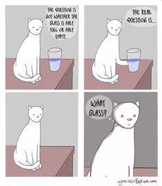 Funny cat cartoons