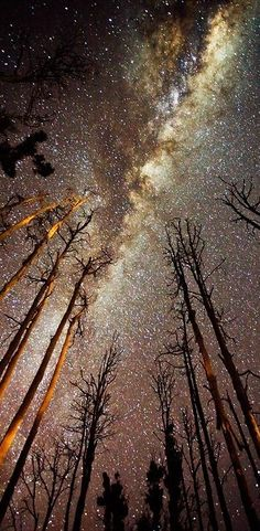 Milky Way / starry sky / space skyscape / the cosmos / space nerd Beautiful Sky, Beautiful World, Beautiful Images, Simply Beautiful, Ciel Nocturne, To Infinity And Beyond, Milky Way, Science And Nature, Amazing Nature
