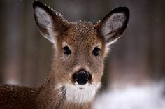 Fawn by Cale Best